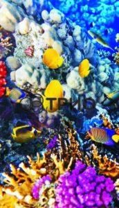 трио коралловый риф