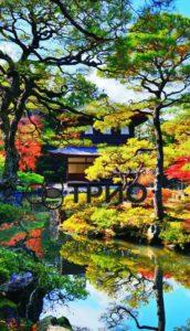 трио японский сад